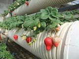 草莓博览园