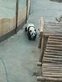 亚布力熊猫馆