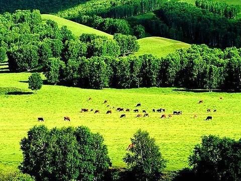 安固里草原旅游景点图片