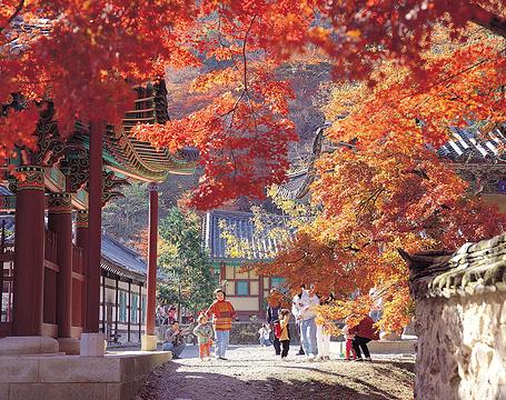 原州市旅游景点图片