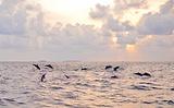 班度士岛日落观海豚体验