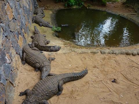 巴拉望野生生物救助和保护中心