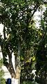 乌石浦油画村