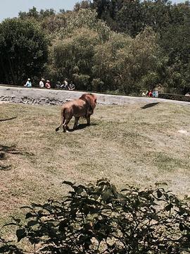 瓜达拉哈拉旅游景点图片