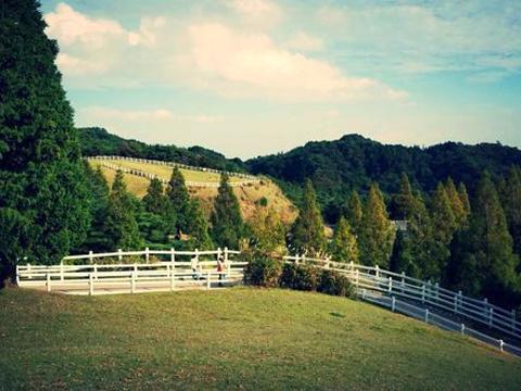 神户市立六甲山牧场旅游景点图片