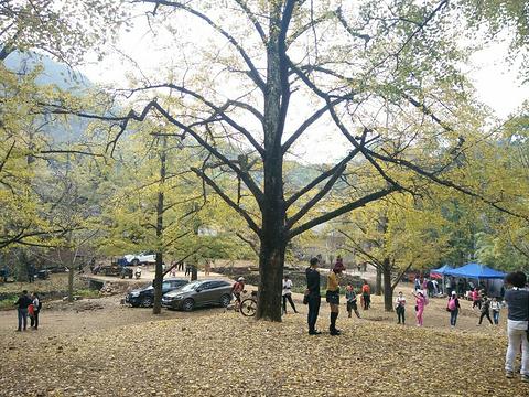大桐木湾村旅游景点图片