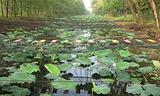 洪泽湖乡土植物园