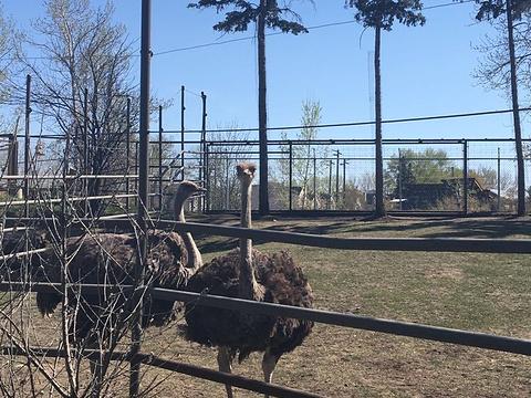 卡尔加里动物园旅游景点图片