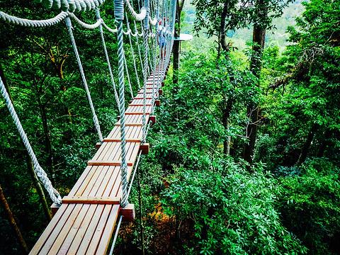 兰卡威Umgawa丛林飞跃旅游景点图片