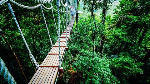 兰卡威Umgawa丛林飞跃的图片