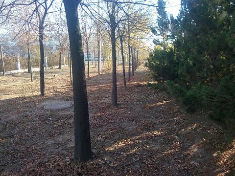 东营森林乐园旅游景点图片