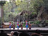 南国槟榔庄园