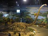 恐龙化石馆