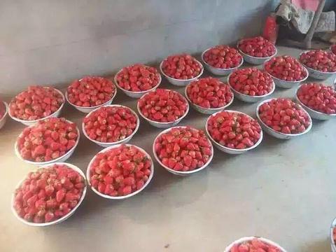 东港迟家99草莓