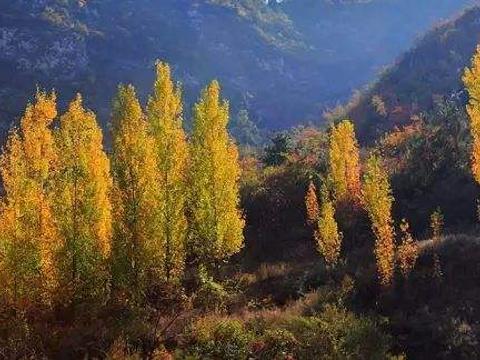 千年榔榆林旅游景点图片
