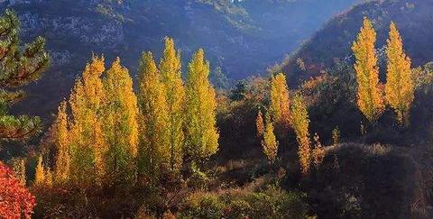 千年榔榆林的图片