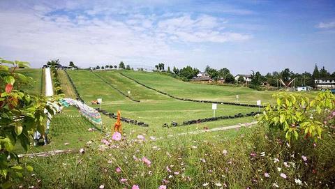 白马关滑草场
