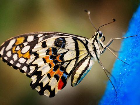 蝴蝶园旅游景点图片