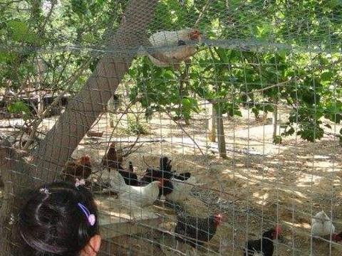 七里渠农场旅游景点图片