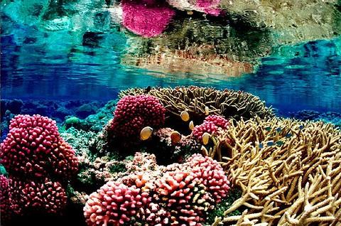 希克杜沃海洋公园