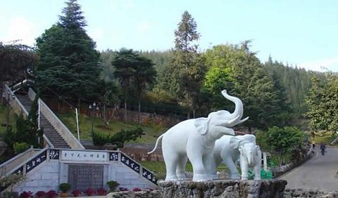 象鼻山温泉森林公园的图片