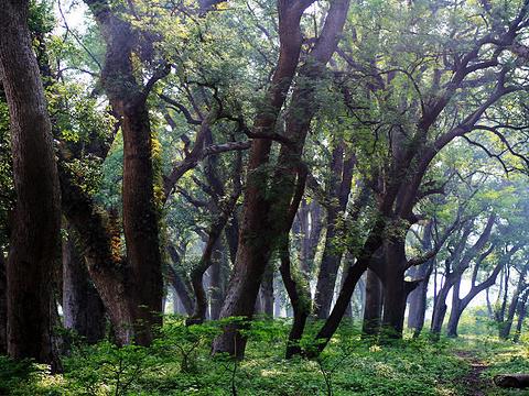 古樟林风景区旅游景点图片