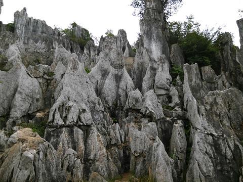华蓥山石林旅游景点图片