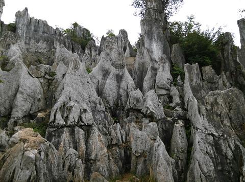 华蓥山石林的图片