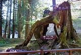三代木及象鼻木
