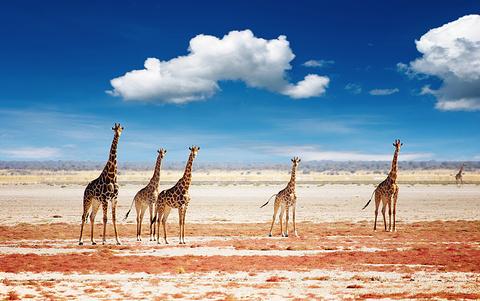 埃托沙国家公园旅游景点图片