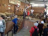 澳大利亚羊毛乐园