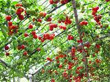 鳌山湾社生蔬菜种植专业合作社