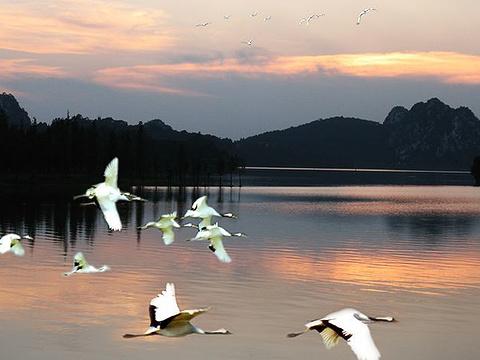 丹顶鹤生态园旅游景点图片