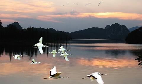 丹顶鹤生态园的图片