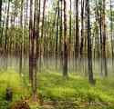 地龙村原始森林