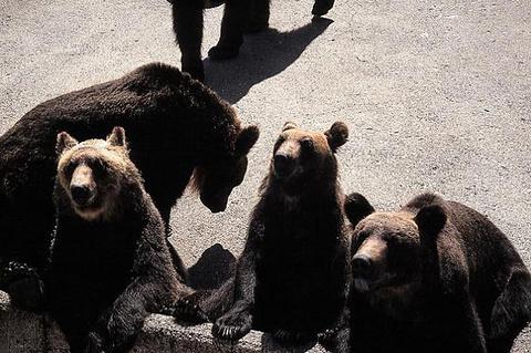 北之森熊牧场