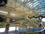 长生浦鲸鱼博物馆