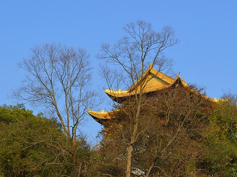 无想寺旅游景点图片
