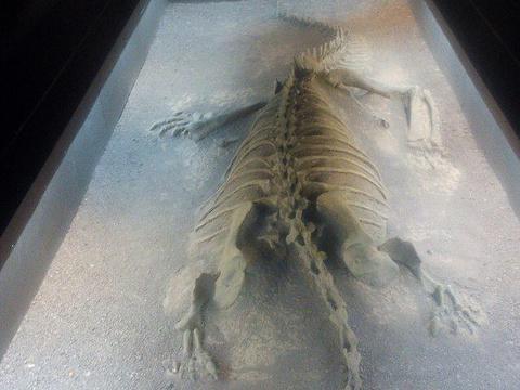 禄丰恐龙化石遗址旅游景点图片