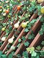 嬉乐湾生态农业示范园