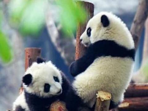 熊猫林旅游景点图片