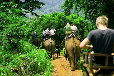 Nosey Parker's  Elephant Camp丛林骑大象