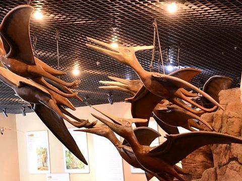 翼龙化石馆旅游景点图片