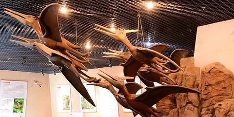 翼龙化石馆的图片