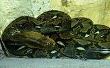 蛇类自然博物馆