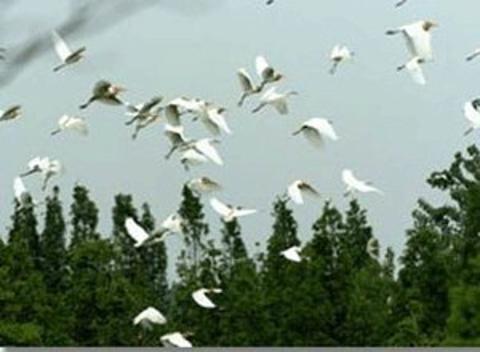 泗洪白鹭保护区