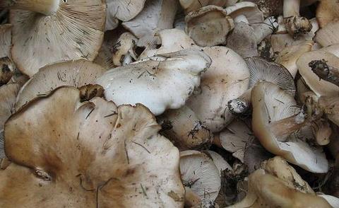 台蘑土特产