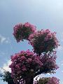 东部花卉世界