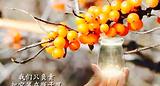 吕梁野山坡果汁(灞桥店)