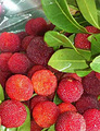 香蜜山生态果庄